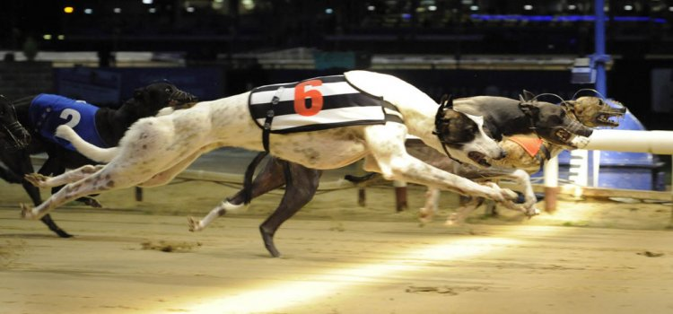 An Overview of Greyhound Racing Betting